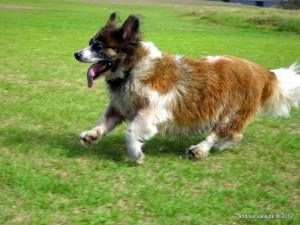 Macky runs