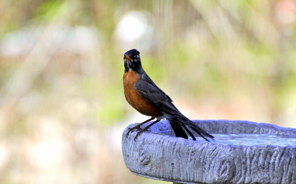 The Harmonious Crow